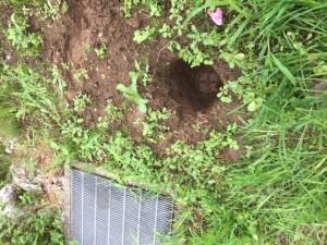 地中深くに埋もれていた杭です。